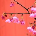 写真: 咲き始めの陽光かな?