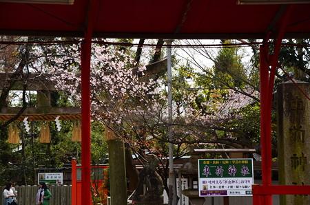 車折神社の桜風景
