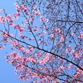 写真: 春の空を染めて~