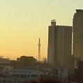 写真: うちのマンションから撮影。エルザと川口市役所の間にスカイツリー。