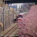 Photos: 170219_三浦・小松ヶ池周辺_京急電車_G170219B9017_MZD300P_X7Ss