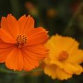 四季の花(08)