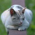 バランス猫