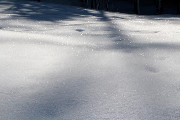 煌めく積雪