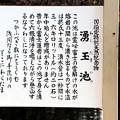 国指定特別天然記念物「湧玉池」解説