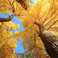 写真: 秋をお知らせ
