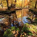 写真: 秋をお知らせ2