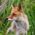 写真: 赤い狩人