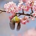 写真: 春の翼