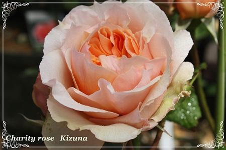 kizuna (4)1