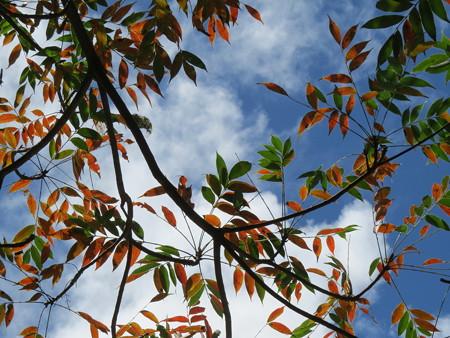 南国の紅葉