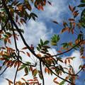 Photos: 南国の紅葉