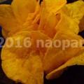写真: image193