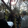 宇津木の森