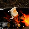 Roasting Marshmallows☆