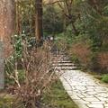 Photos: 鎌倉散歩