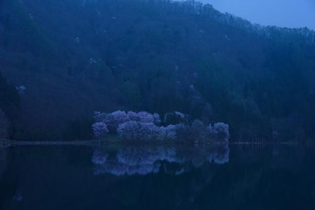 中綱湖の桜(水鏡)20160424