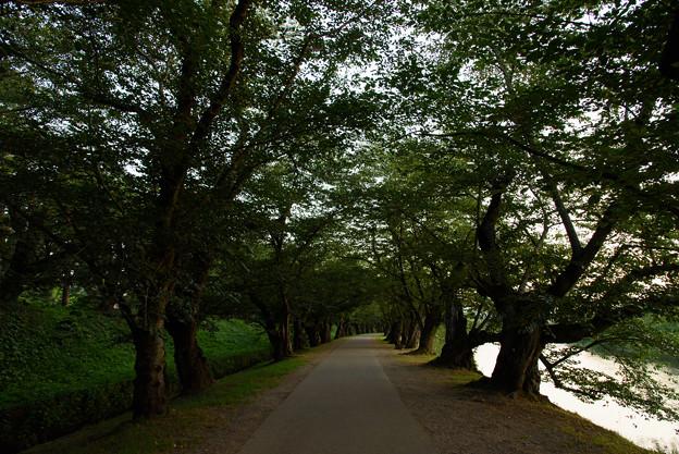 Photos: 弘前城20160813