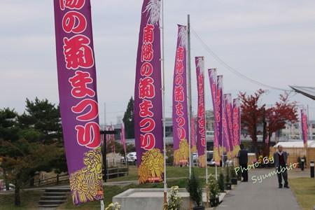 南陽の菊祭り