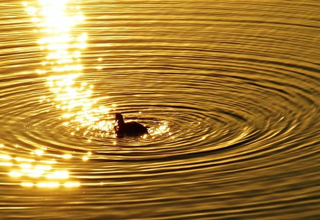ゴールドの波紋