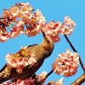 Photos: 花粉だらけw
