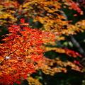 『秋の色彩。。。』