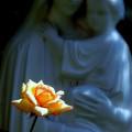 写真: マリア像とバラ