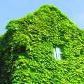 Photos: 葉っぱのお家