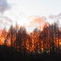 写真: まるで山火事