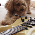 Photos: Guitar003 ホワイト