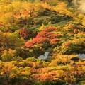 写真: 日本一早い紅葉を求めて 4