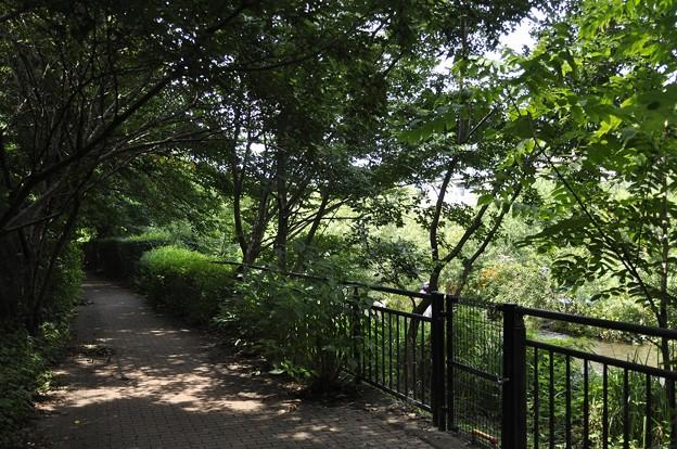 緑陰の遊歩道