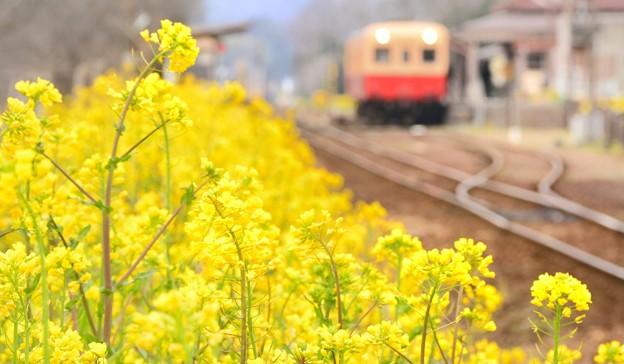 写真: 小湊鐡道 馬立駅