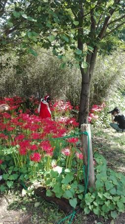 赤い曼珠沙華と赤い洋服(モデルかあ)