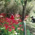 Photos: 赤い曼珠沙華と赤い洋服(モデルかあ)