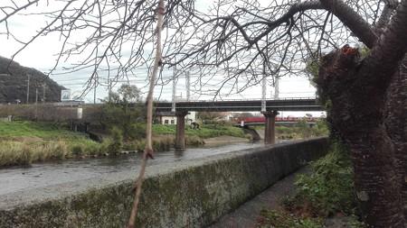 河津 伊豆急行の鉄橋と桜まだ固いつぼみです。
