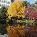 Photos: 紅葉の鏡@日比谷公園