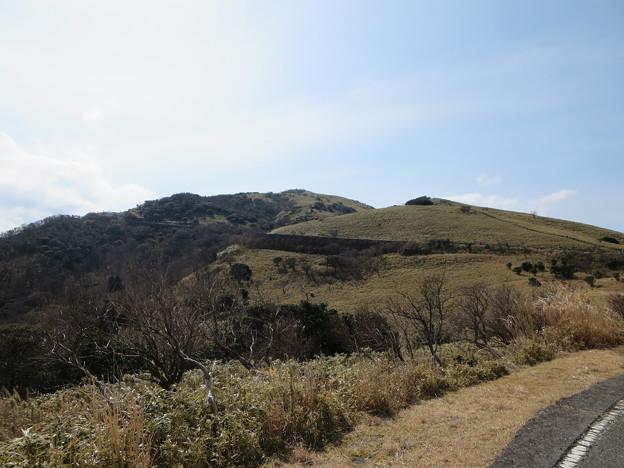 写真: 達磨山