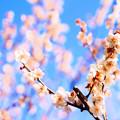 写真: 春の先駆け