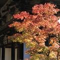 Photos: 楼門と紅葉