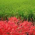 緑と紅の彩