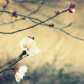 早春の便り