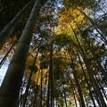 Photos: 竹林の彩