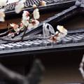 写真: 屋根にサギ(梅付き)