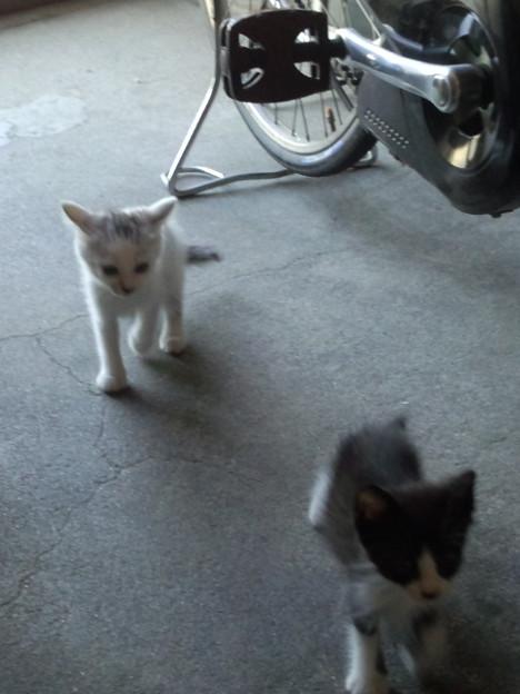 我が家に猫が来た日