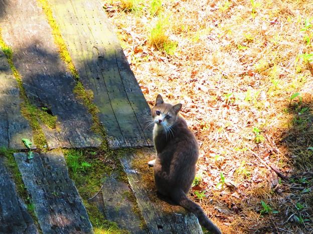 お散歩途中に会ったネコ