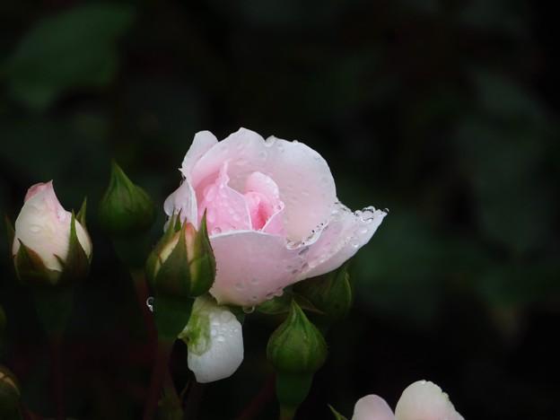 Rain&Rosa 6