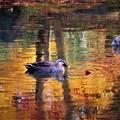 紅葉が水面に映る風景 3