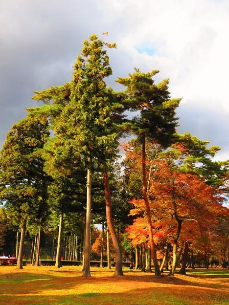 Photos: 紅葉のある風景 9