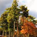 紅葉のある風景 9